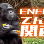 関西でもENEOSでんきは安いけどもっとお得な新電力があります!